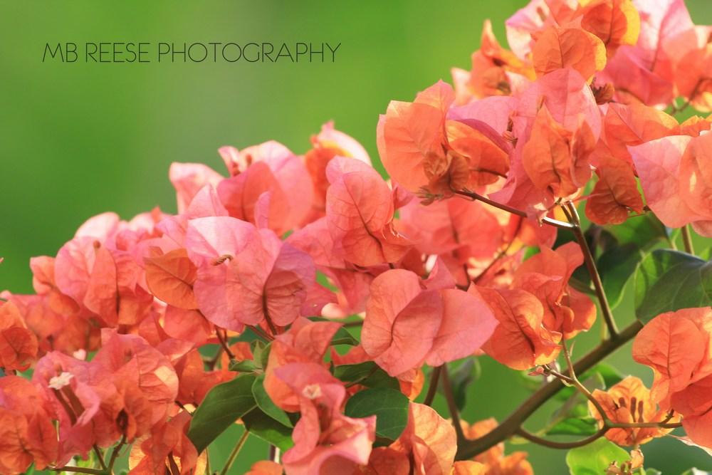 Nevis Flowers